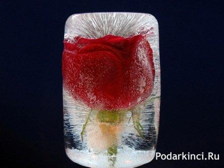 цветок во льду