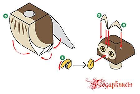 туловище совы