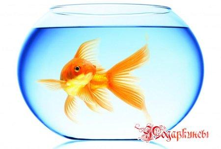 Декоративная рыбка